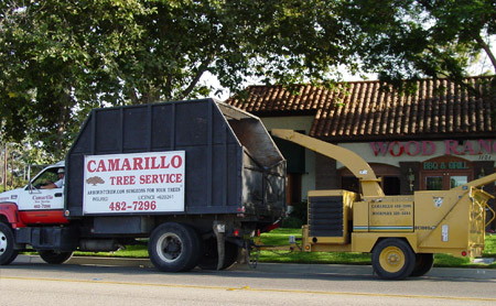 Camarillo Tree Service