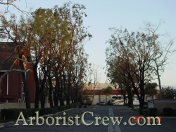 Professionally landscaped business park maintained by Camarillo Tree Service