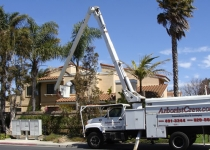 Palm Tree Trimming in Camarillo: During