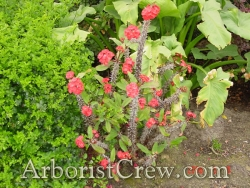 Native wildflowers used in landscaping in Camarillo