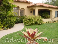 Professional landscaping in Camarillo, California