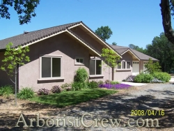 Drought-resistant landscaping by Camarillo Tree Service