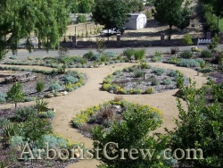 Drought-friendly landscaping in Camarillo