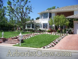 Professional landscaping by Camarillo Tree & Landscape adds curb appeal to this Camarillo home.