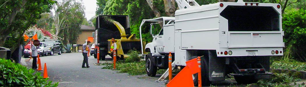 Tree Trimmers in Ventura County