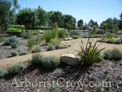 Drought-friendly landscaping in Camarillo, California