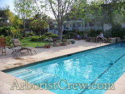 Poolside patio area is enhanced by professional landscaping by Camarillo Tree & Landscape