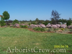 Lawn care and landscaping by Camarillo Tree & Landscape