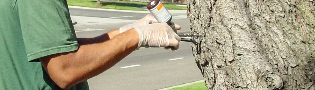Healthcare for trees in Ventura County