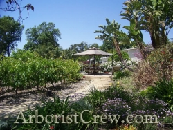 A winding path makes its way to a beautifully landscaped gazebo in Camarillo, CA.