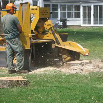Stump Grinding in Ventura County & west Los Angeles County