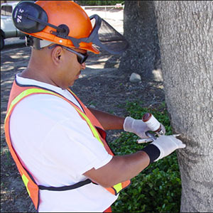 Ventura County Tree Healthcare
