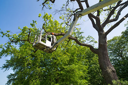 Ventura County Professional Tree Pruning